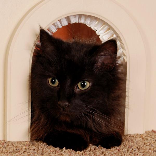 cat door 1