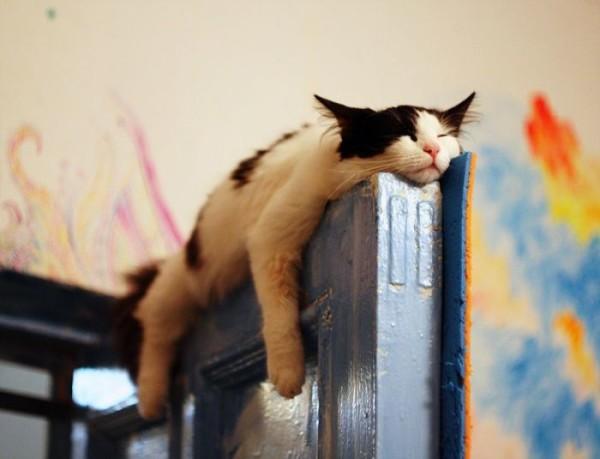 cat door 3