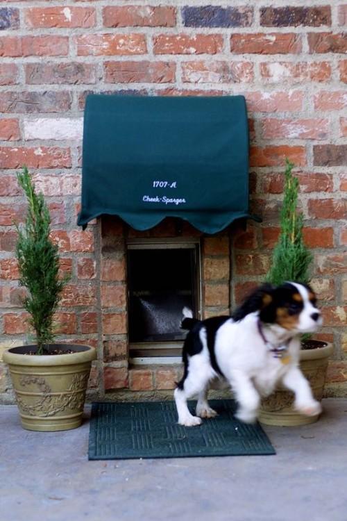 10 Options of Dog Doors
