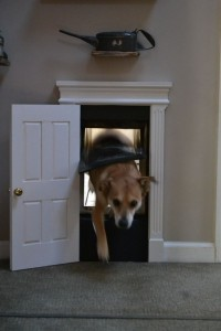 dog doors 7