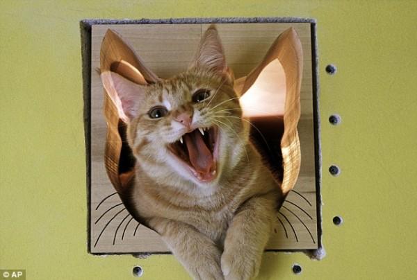 indoor cat door 3