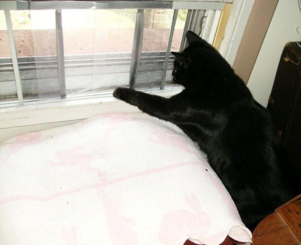 window cat door 2