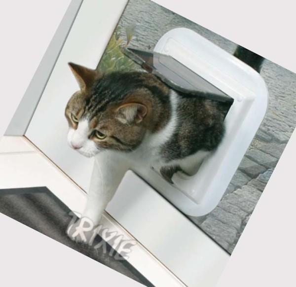 window cat door 3