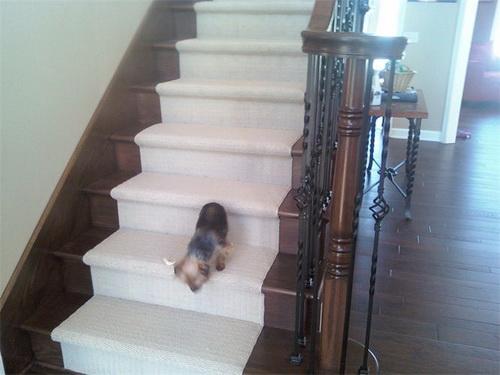 Berber-carpet-runner-for-stairs-photo-10