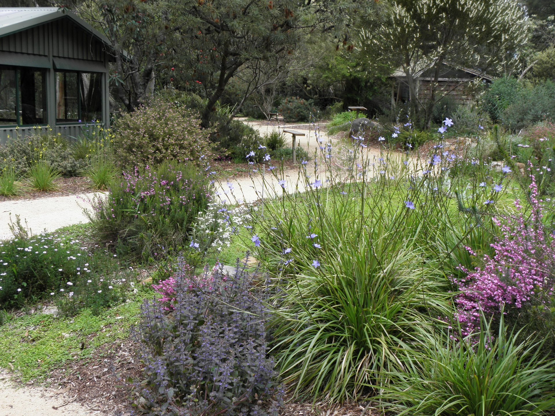 australian native plants for rock gardens that can survive the heat