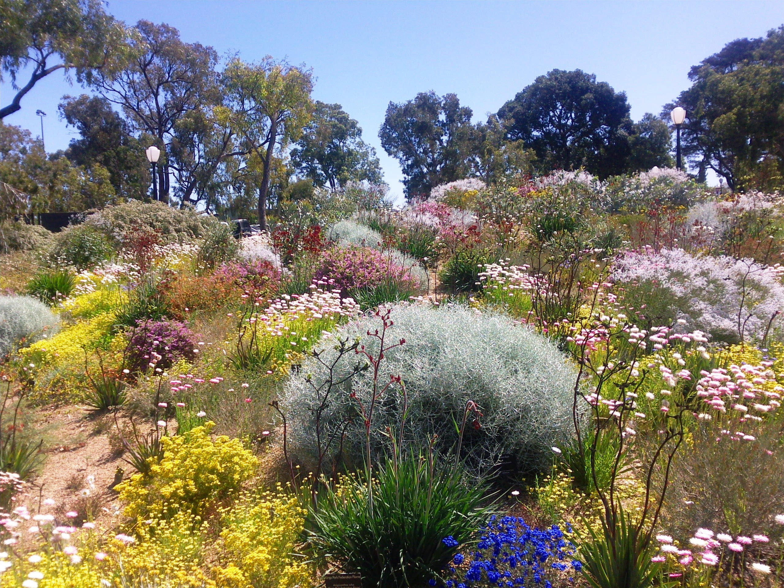 Australian Native Plants For Rock Gardens That Can Survive