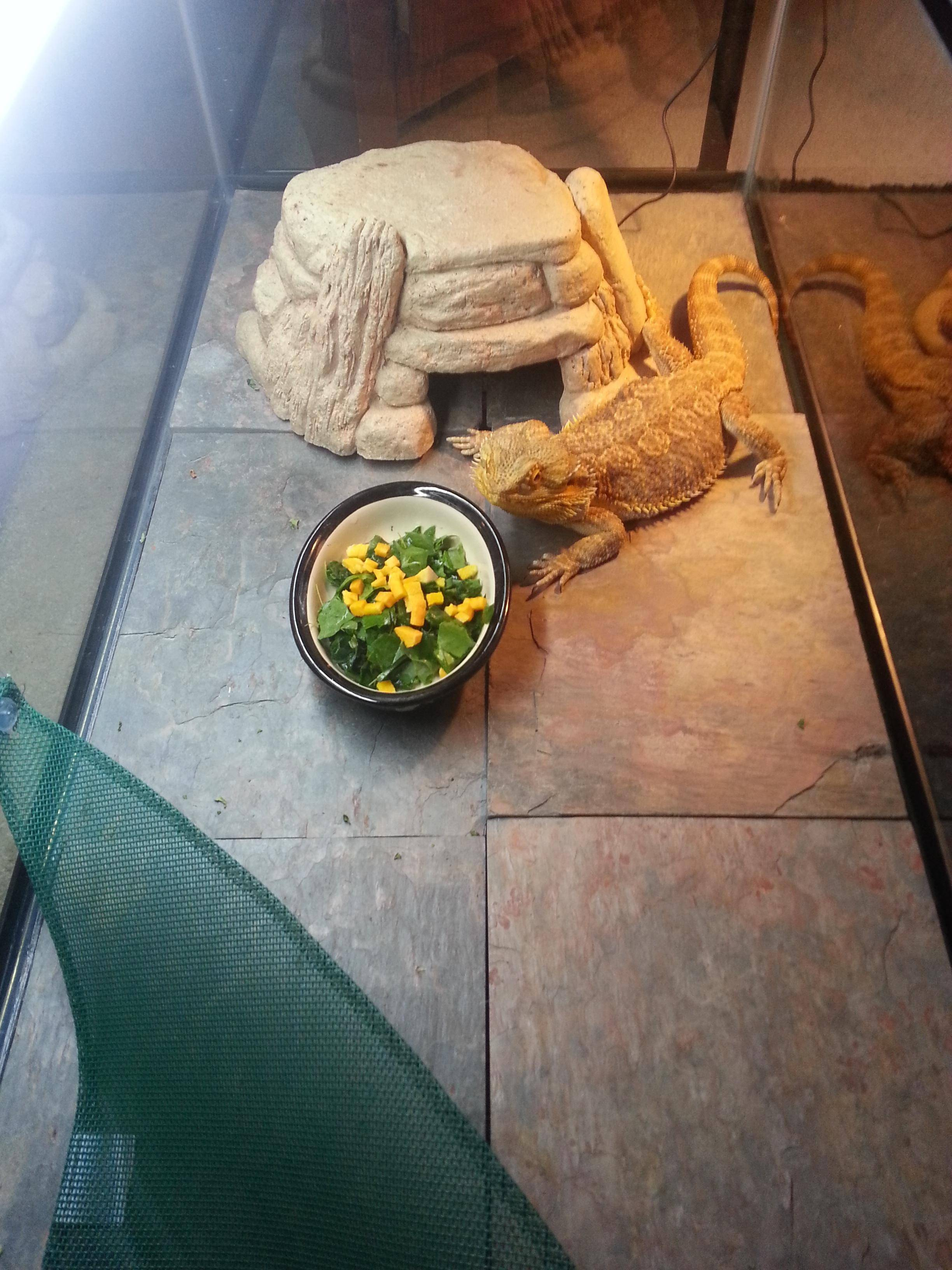 Upgrade Your Pets Private Accommodations With Slate Tiles