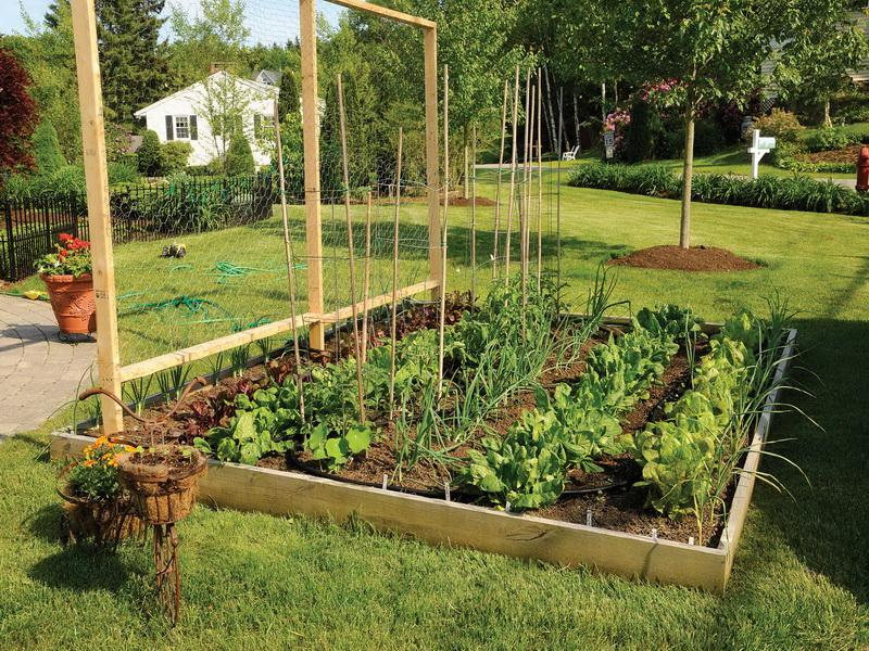 20 Vegetable garden box ideas for 2019