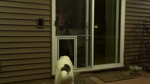 Dog-door-for-screen-door-photo-15