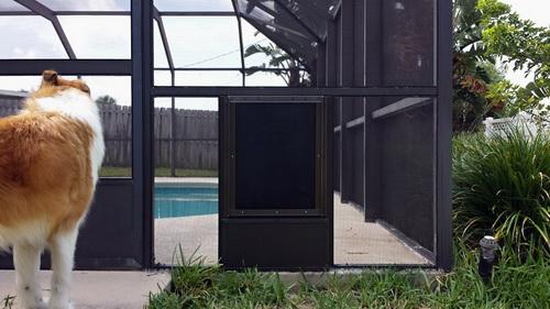 Dog-door-for-screen-door-photo-21