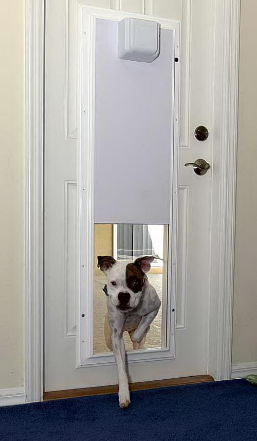 Dog-door-for-screen-door-photo-25