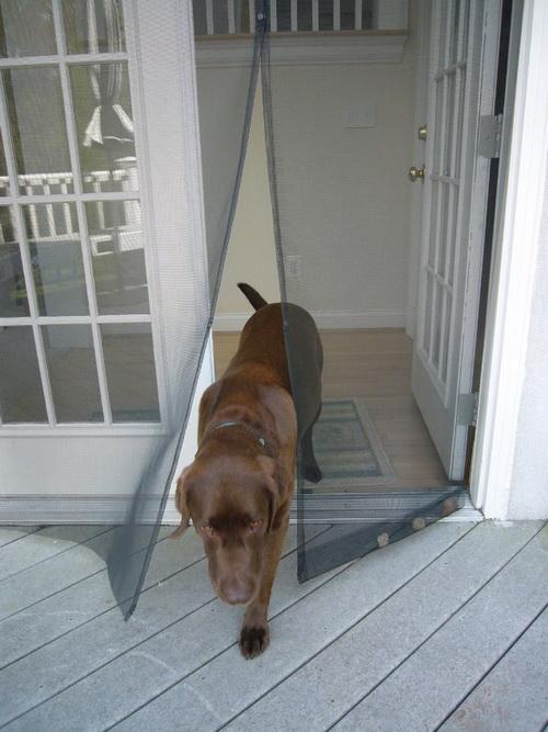 Large-dog-door-photo-10