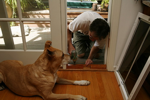 Large-dog-door-photo-22