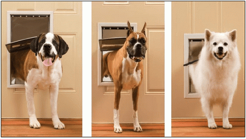 Large-dog-door-photo-9