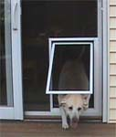 20 things you should to know about Dog screen door