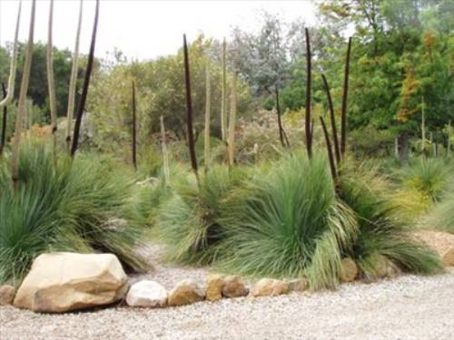 australian native plants for rock gardens photo - 1