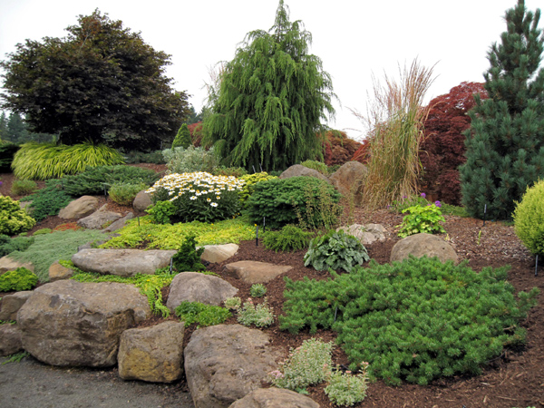 australian native plants for rock gardens photo - 6