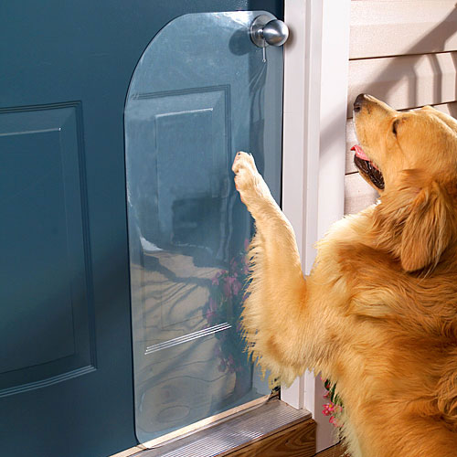 dog scratching door photo - 1