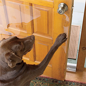 dog scratching door photo - 2