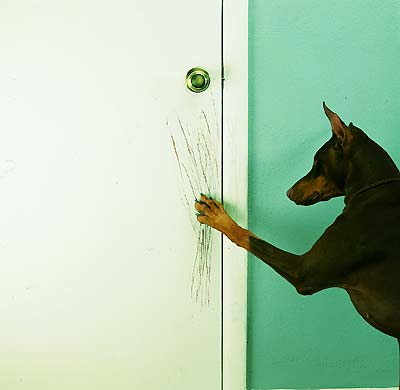 dog scratching door photo - 4