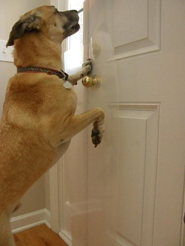 dog scratching door photo - 5
