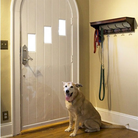 dog scratching door photo - 9