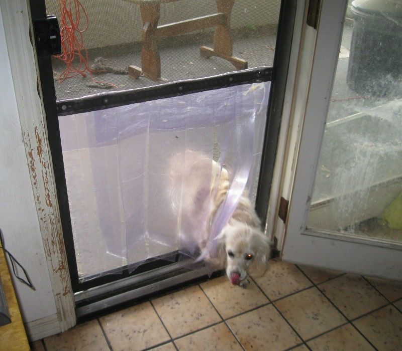 dog screen door photo - 7
