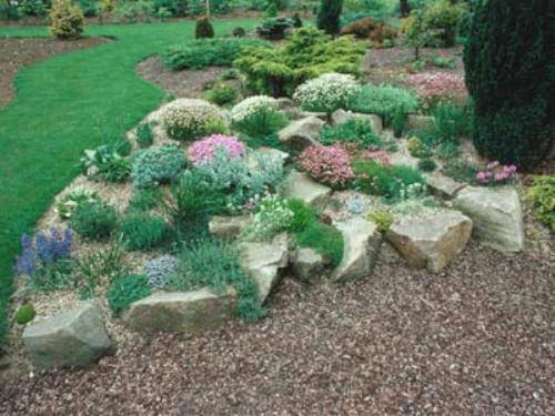 flowers and plants for rock gardens photo - 3