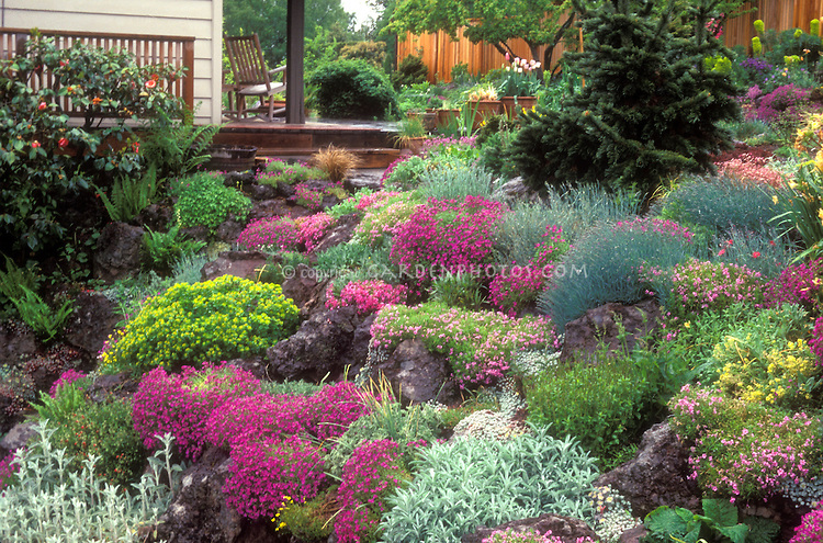 flowers and plants for rock gardens photo - 4