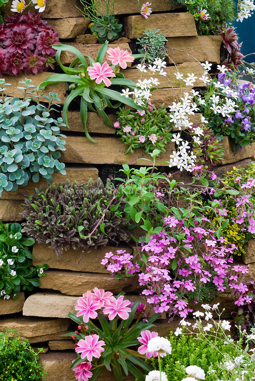 flowers and plants for rock gardens photo - 6