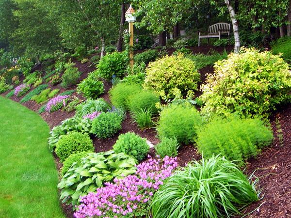 garden design ideas shrubs photo - 6