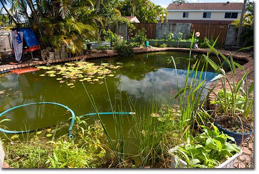 swimming pool backyard ideas photo - 6