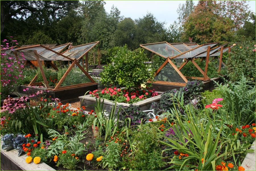 veg garden design ideas photo - 2