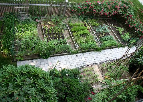 veg garden design ideas photo - 3