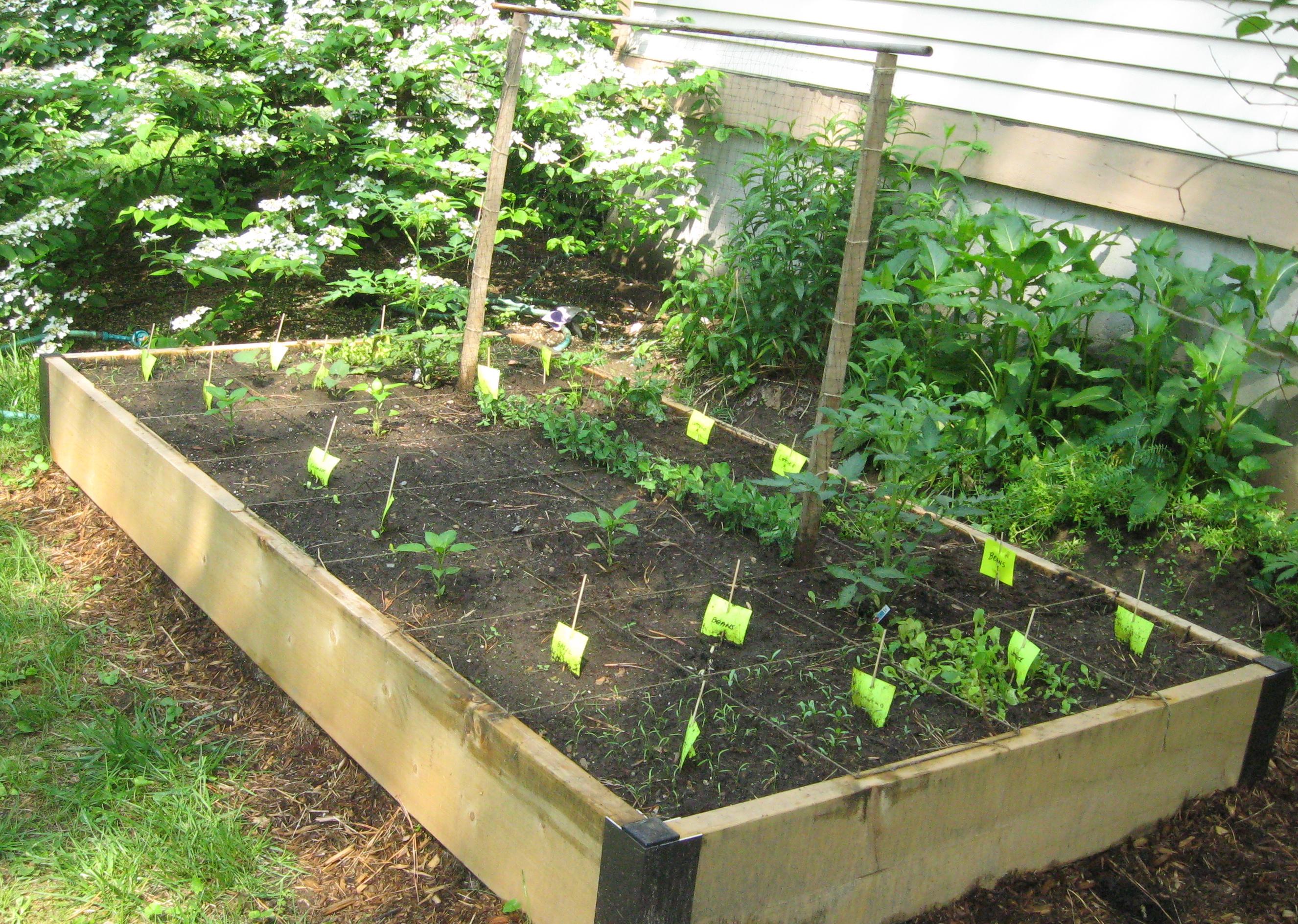 vegetable garden box ideas photo - 3