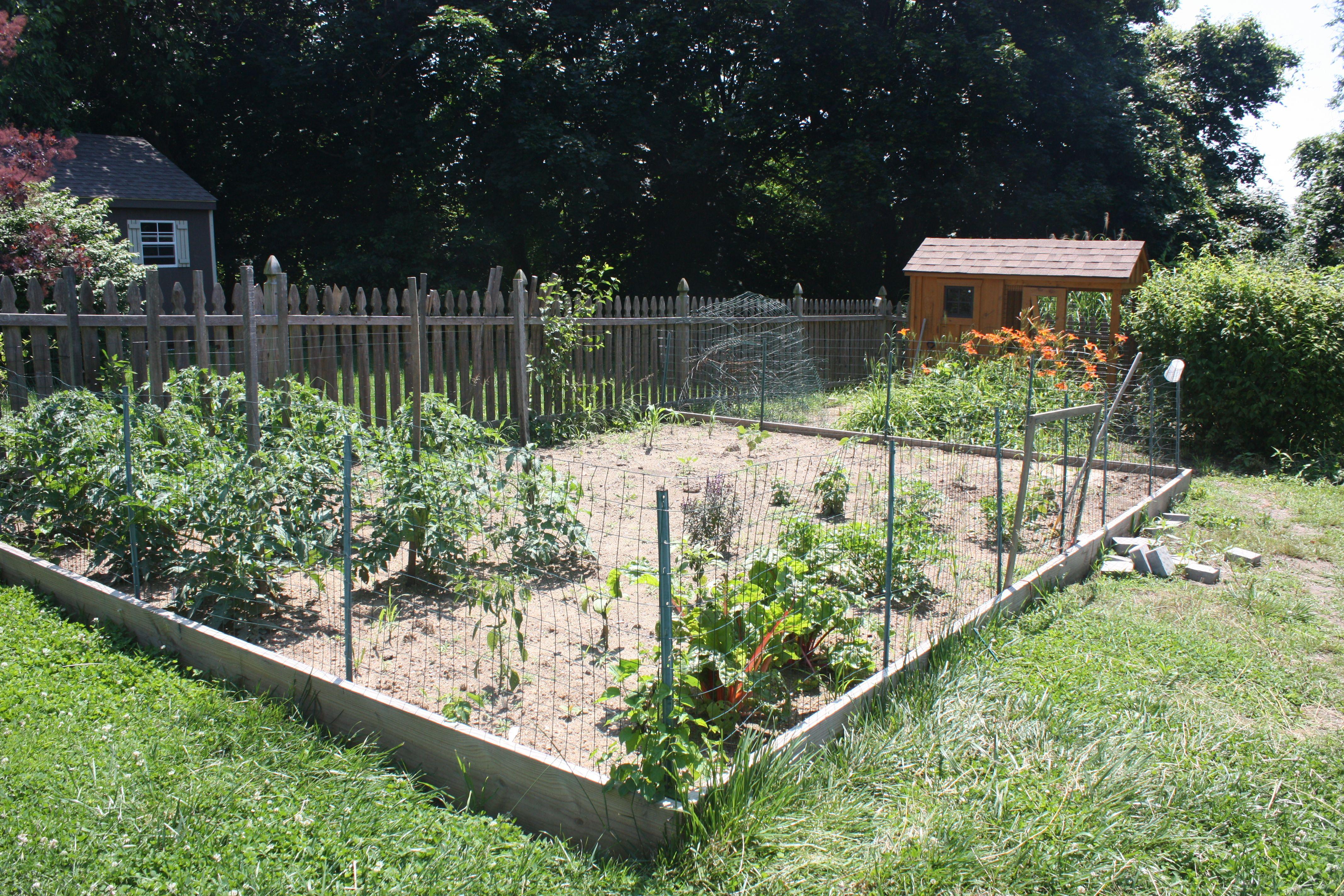 Merveilleux Vegetable Garden Fence Chicken Wire Photo   1