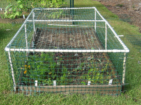 vegetable garden fence chicken wire photo - 6